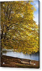 A Tree With Golden Leaves And A Park Acrylic Print by John Short
