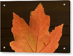A Vibrant Colored Leaf Acrylic Print by Joel Sartore