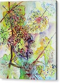 A Vineyard Morning Acrylic Print
