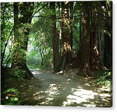 A Walk In The Forest Acrylic Print