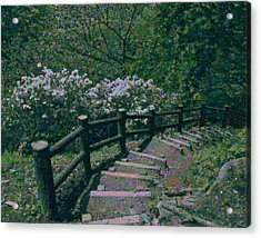 Acrylic Print featuring the photograph A Walk In The Park by Tim Ernst