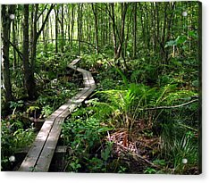 Acrylic Print featuring the photograph A Walk In The Woods by Doug McPherson