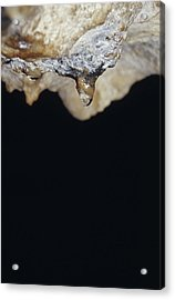 A Water Drop Seeps From A Stalagtite Acrylic Print by Jason Edwards
