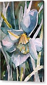 A Weepy Daffodil Acrylic Print by Mindy Newman