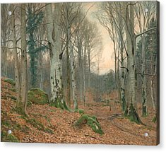 A Welsh Wood In Winter Acrylic Print by JT Watts