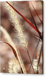 Acrylic Print featuring the photograph A Whisper In The Wind by Amy Gallagher