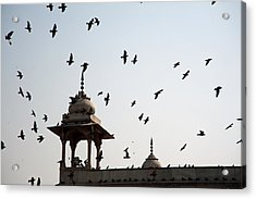 Acrylic Print featuring the photograph A Whole Flock Of Pigeons On The Top Of The Ramparts Of The Red Fort In New Delhi by Ashish Agarwal