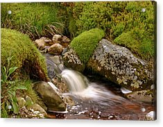 A Wicklow Stream Acrylic Print by Martina Fagan