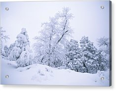 A Winter Landscape Of Snow-covered Acrylic Print by Rich Reid