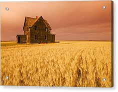 Abandoned Farm House, Wind-blown Durum Acrylic Print by Dave Reede