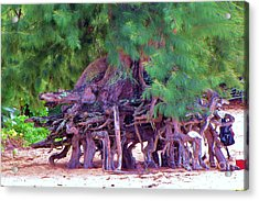 Acrylic Print featuring the photograph Above Ground Roots On Tamarisk Tree  by Michele Penner