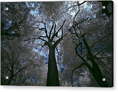 Above It All Acrylic Print