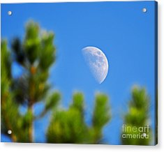 Above The Pines Acrylic Print by Al Powell Photography USA