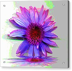 Acrylic Print featuring the photograph Abstract Daisy by Carolyn Repka
