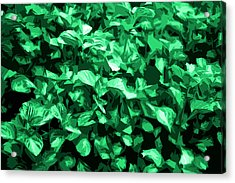 Acrylic Print featuring the photograph Abstract Greeen by Serene Maisey