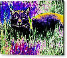 Abstract Of Tabby Acrylic Print