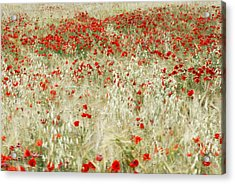 Abstract Poppies Acrylic Print by Guido Montanes Castillo