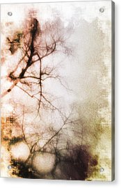 Abstract Trees Acrylic Print by David Ridley