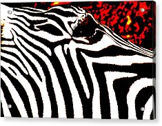 Abstract Zebra 001 Acrylic Print by Lon Casler Bixby