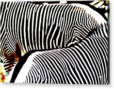Abstract Zebra 002 Acrylic Print by Lon Casler Bixby