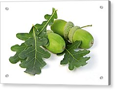 Acorns With Oak Leaves Acrylic Print by Elena Elisseeva