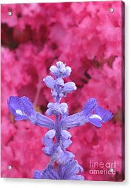Acrylic Print featuring the photograph Across by Tina Marie