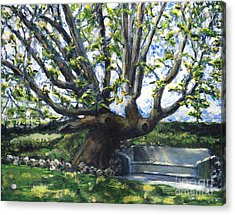 Adamson Home Tree Acrylic Print by Randy Sprout