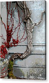 Acrylic Print featuring the photograph Adare Ivy by Charlie and Norma Brock