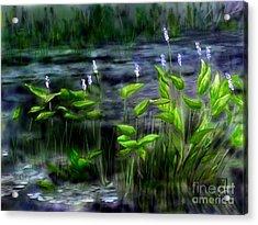 Adirondacks Natural Wetlands Pickeral Plant Acrylic Print by Judy Filarecki