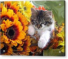 Adorable Baby Animal - Cute Furry Kitten In Yellow Flower Basket Looking Down - Kitty Cat Portrait Acrylic Print by Chantal PhotoPix