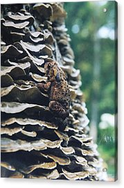Acrylic Print featuring the photograph Adventurous Toad by Gerald Strine