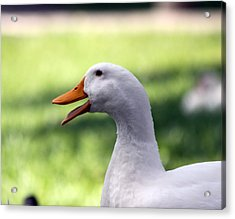 Aflac Acrylic Print by Jeanne Andrews