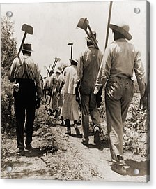 African American Cotton Hoers Worked Acrylic Print by Everett
