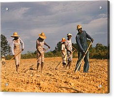 African American Men And Women Chopping Acrylic Print by Everett