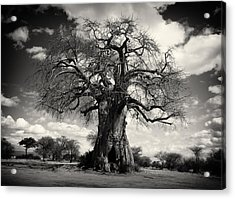 African Baobabs Tree Acrylic Print by Jess Easter