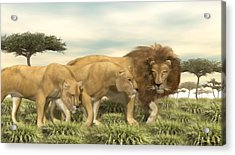 Acrylic Print featuring the painting African Lion Pride by Walter Colvin