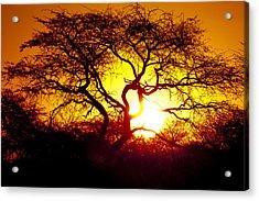African Tree Acrylic Print