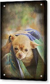 After The Bath Acrylic Print by Laurie Search