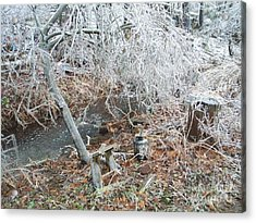 After The Ice Storm In Maine Acrylic Print by Jeannie Atwater Jordan Allen