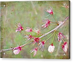 After The Party's Over Acrylic Print by Judi Bagwell