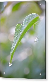 Acrylic Print featuring the photograph After The Rain by JD Grimes