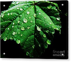 Acrylic Print featuring the photograph After The Rain by Lin Haring