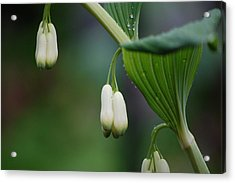 Afternoon Green Acrylic Print by Dickon Thompson