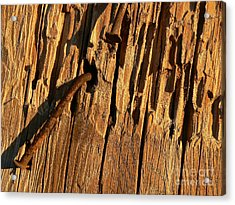 Acrylic Print featuring the photograph Against The Grain by Lin Haring