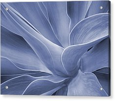 Agave In Blue Acrylic Print