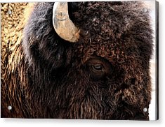 Acrylic Print featuring the photograph Ageless Bison Of Yellowstone by Yeates Photography