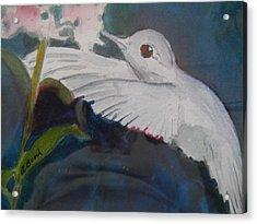 Albino Humingbird Acrylic Print
