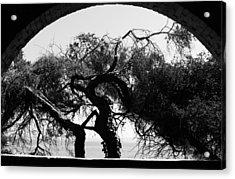 Alcatraz Tree Acrylic Print by Ty Helbach