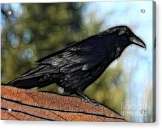Alfred On The Roof Acrylic Print by Marjorie Imbeau