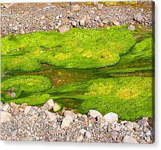 Algae Bloom Natural Abstract Art Of Nature Acrylic Print by Merton Allen
